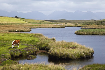 Twelve bens mountain range with a cow grazing along the water's edge, near ballyconneely;County galway, ireland