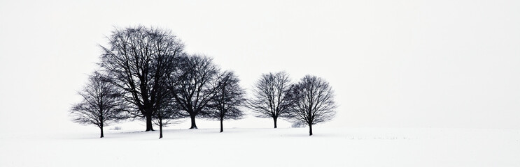 Trees in a snowy field in chatsworth park;Derbyshire, england
