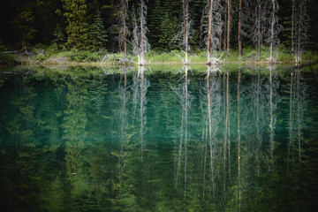 Trees reflected in the blue-green water of a small spring fed pond, jasper national park;Alberta, canada