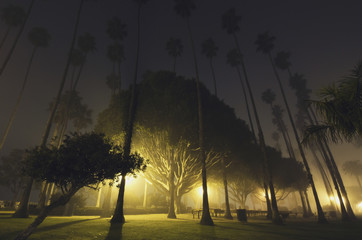 A foggy night in palisades park;Santa monica california united states of america