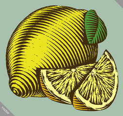Engraved isolated vector illustration of a lemon