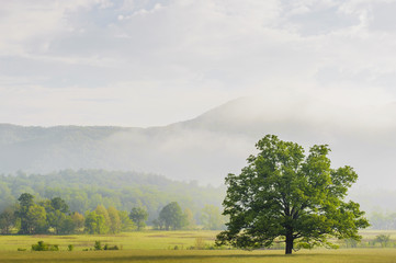 Early morning in cades cove great smoky mountains national park;Tennessee united states of america