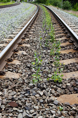 Plants growing up from the rocks in the middle of train tracks;Alberta canada