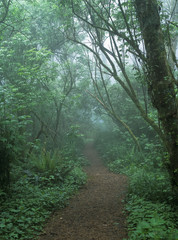 A foggy hiking trail at Cape Perpetua; Yachats, Oregon, United States of America