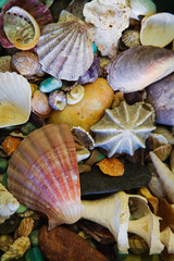 Assorted colourful seashells; Sydney, New South Wales, Australia