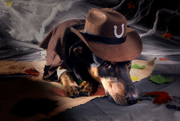 Portrait of a dog in a cowboy hat, which lies on the mat and loo