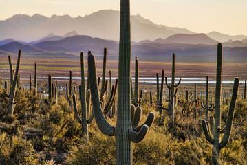 Saguaro National Park; Arizona, United States of America