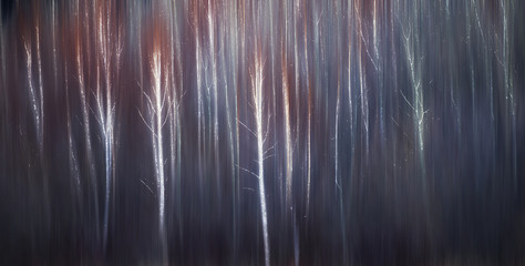 Abstract trees with motion blur; Alberta, Canada