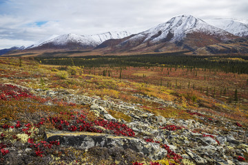 The landscape along the Dempster Highway is alive with autumn colours; Yukon, Canada