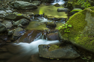 Necarney Creek flows out of the Coast Range at Oswald West State Park; Manzanita, Oregon, United States of America