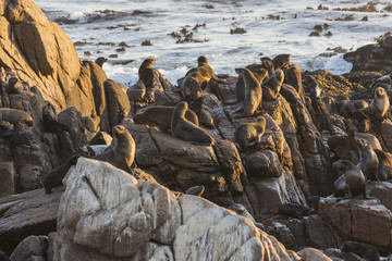 Seal colony along the coast; South Africa