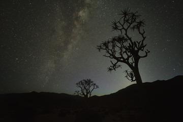 Kookerboom tree under the Milky Way, Richtersveld National Park; South Africa