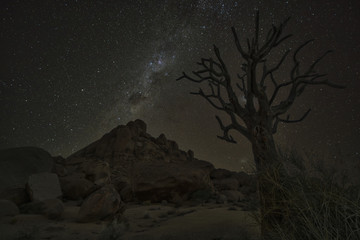 Milky Way shines in the night sky above a dead Kookerboom tree in Richtersveld National Park; South Africa