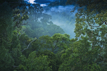 Jungle scene on canopy walk at Ulu Temburong National Park; Brunei
