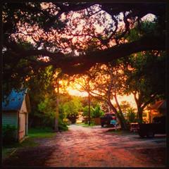 Live Oak Tree at Sunset