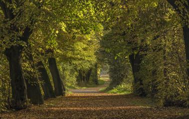Oak trees alley near Chabarovice town