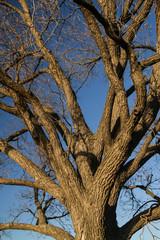 Tree Brannches