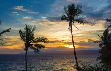 Silhouette of palm trees during sunset.