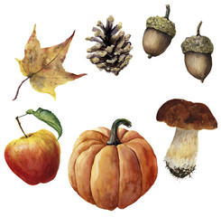 Watercolor autumn harvest set. Hand painted pine cone, acorn, pumpkin, apple, mushroom and yellow leaf isolated on white background. Botanical illustration for design
