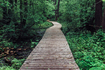 Garden Poster Road in forest Wooden pathway among deciduous forest