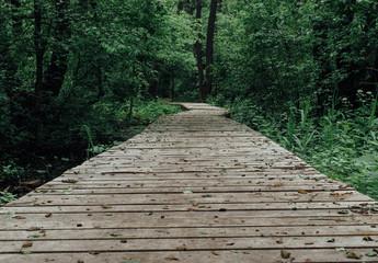 Keuken foto achterwand Weg in bos Wooden pathway among deciduous forest