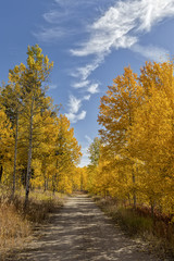 A rural dirt road north of West Yellowstone Montana