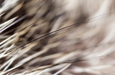 cat hair as background. macro