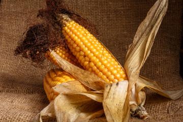 Початок кукурузы на деревянном фоне