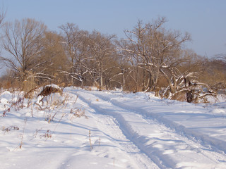 Field road in the winter