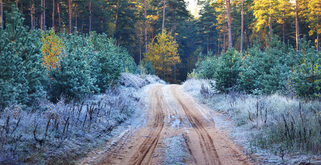 A road in the Autumn forest covered with rime