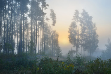 Strong fog at the field next to the forest at the sunrise
