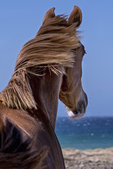 Horse back, overlooking the sea