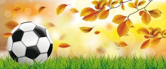 Autumn Beech Foliage Sunlights Grass Football