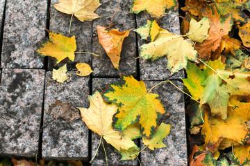 Осенние листья на бетонной платформе