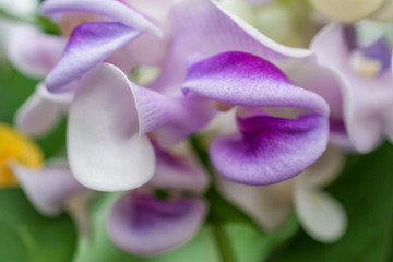 macro detail of white and purple tropical orchid