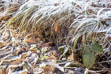 Vereiste Gräser säumen den Weg im Winter