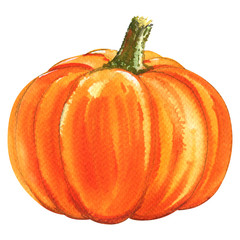 Fresh orange pumpkin isolated, watercolor illustration on white