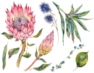 Set of floral vintage watercolor protea