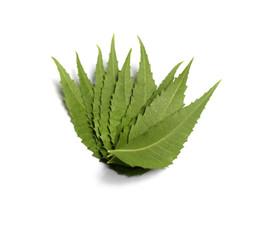 Medicinal Neem Leaves
