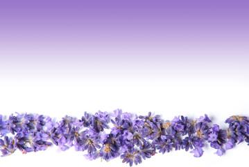 Lavendel Karte