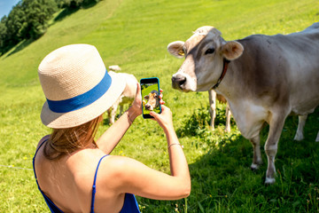 Young female traveler photographing with phone cows on the meadow in Switzerland