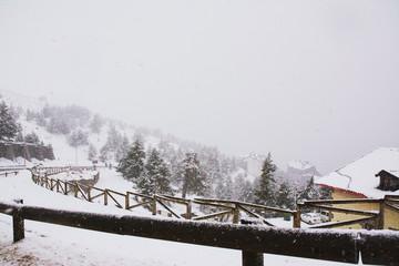 Epic winter forest landscape.