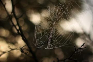 Паутина на ветках дерева
