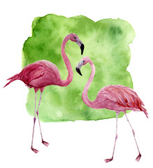 Watercolor two flamingo. Hand painted pink bird illustration with green background isolated on white background. Flamingo print for design