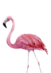 Watercolor pink flamingo. Exotic hand painted bird illustration isolated on white background. For design, prints or background