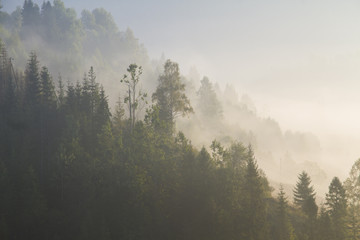 Deurstickers Grijze traf. at morning dawn mist over forest in mountains