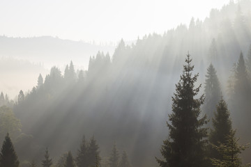 at morning dawn mist over forest in mountains
