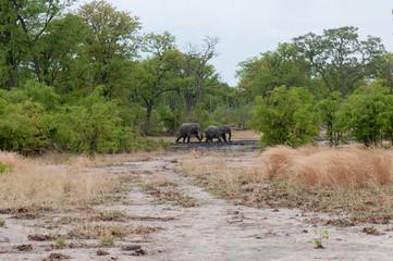 safari in bostwana