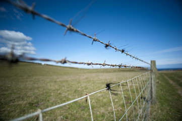 Wide Grassy Landscape with Wire Fence