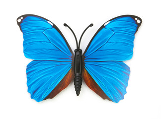 blue fake butterfly isolated